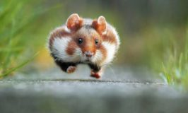Winners of the First Annual 'Comedy Wildlife Photography Awards'